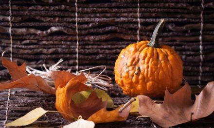 """La libreria """"Birbantana"""" di Lecco festeggia Halloween: un pomeriggio alla ricerca di zucche birbanti"""