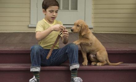 """Qua la zampa! Un simpatico cagnolone vi attende nel fine settimana al """"Palladium"""" di Lecco"""
