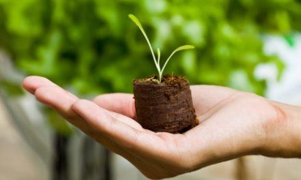 """""""Ludoofficina"""" a Galbiate: i bambini vanno alla scoperta delle piante!"""