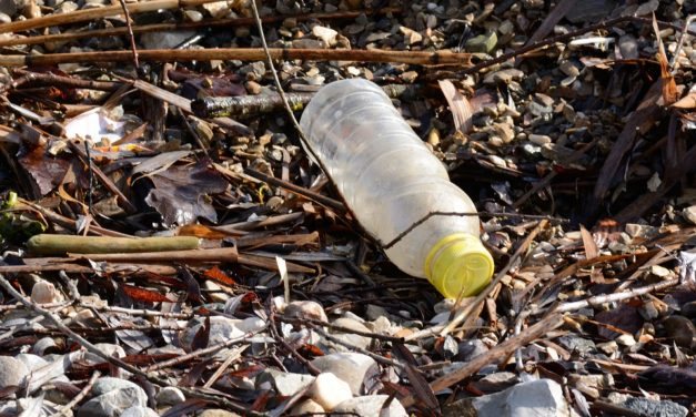 "PESCARENICO, ""CLEAN UP"" E APERICENA PLASTIC FREE"